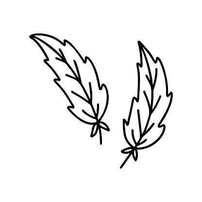 Contour bird feather. Outline icons
