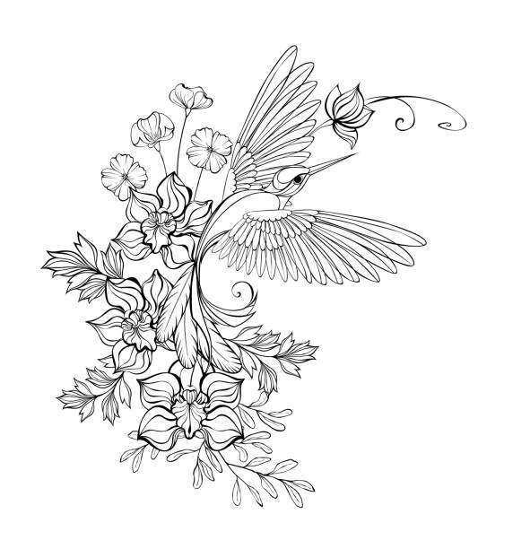 Contour hummingbird with orchids Artistically drawn, monochrome, contour, flying hummingbird with contour orchids and wildflowers on white background. Outline drawing. coloring book pages templates stock illustrations
