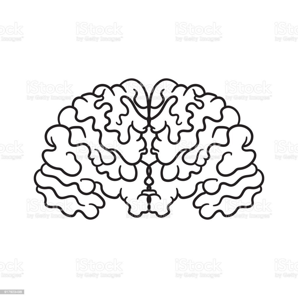 Contour Pattern With A Picture Of The Brain A Simple Icon Without ...