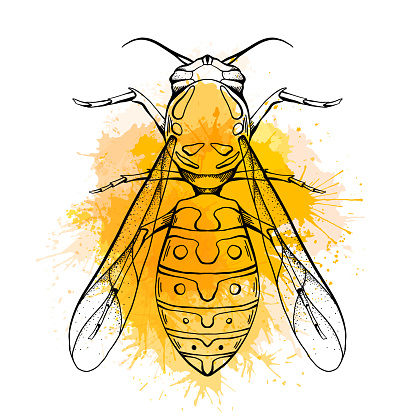 Contour sketch of a wasp with a top view with yellow watercolor splashes on a white background. Flying insect. Vector outline object
