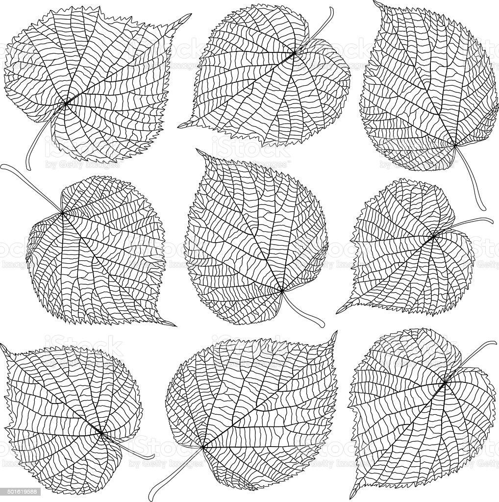 contoured linden leaves vector art illustration
