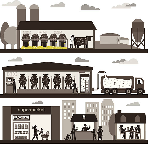 Conventional Dairy Production vector art illustration