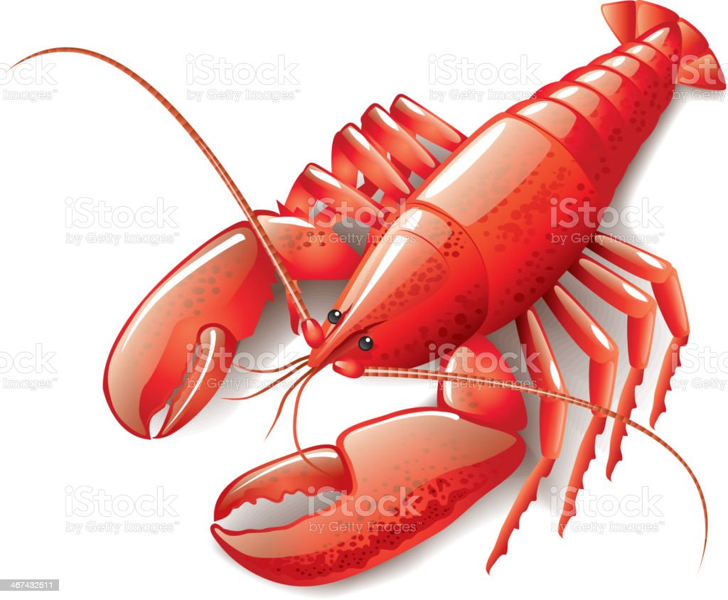 Cooked lobster isolated on white vector art illustration