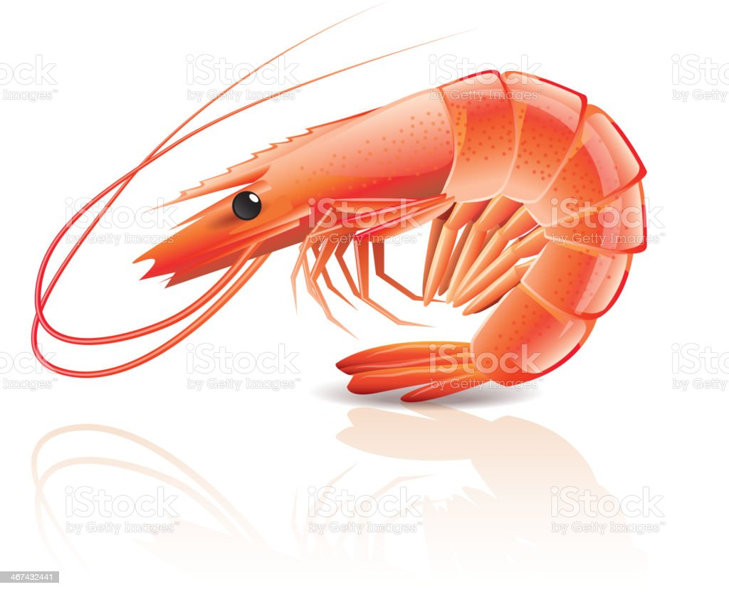 Cooked shrimp isolated on white vector art illustration