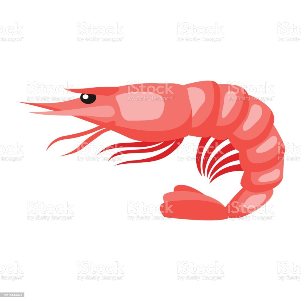Cooked tiger shrimp. Isolated illustration of seafood on white background vector art illustration