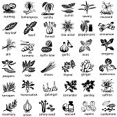 Icon set of herbs and spices commonly used in cooking. Single color. Isolated.