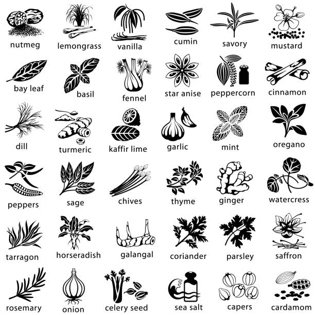 Cooking Herbs and Spices Icons Icon set of herbs and spices commonly used in cooking. Single color. Isolated. star anise stock illustrations