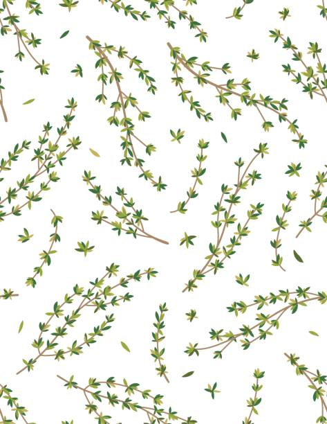 Cooking Herbs Seamless Pattern - Thyme Cooking Herbs Seamless Pattern. Leaves and stems of thyme. thyme stock illustrations