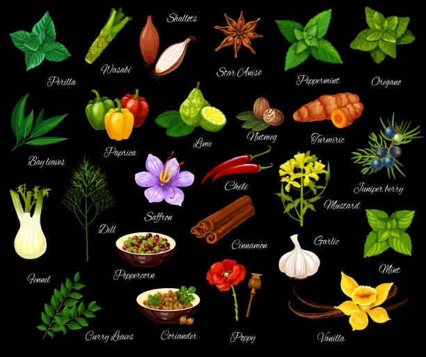 Cooking seasonings, herbs and spices Spice and herbs, seasonings and condiment. Vector perilla and wasabi, shallot and anise, peppermint and oregano, bay and leaf, paprika and lime. Nutmeg and turmeric, fennel and dill, saffron and chili dill stock illustrations