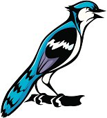 Cool Blue Jay Bird Illustration