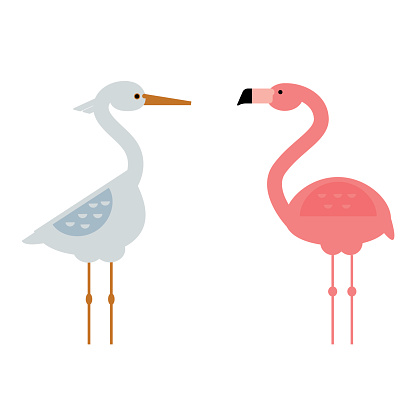 Cool stork and flamingo vector illustration.