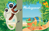 vECTOR Coquerel's Sifaka and Chameleon