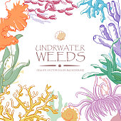 Disegno A Mano Set Di Alghe Alghe Coralli E Pietre Immagini