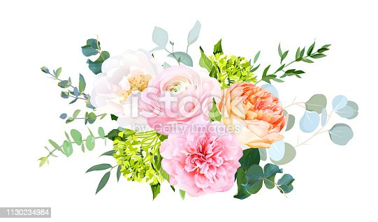 Coral juliet garden rose, pink ranunculus, peony, green hydrangea, eucalyptus and greenery vector design horizontal bouquet.Spring wedding flowers. Floral banner.Isolated and editable