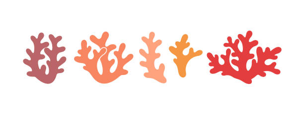 coral logo. isolated coral on white background. set - marine life stock illustrations