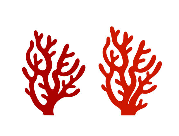 Coral logo. Isolated coral on white background EPS 10. Vector illustration coral colored stock illustrations