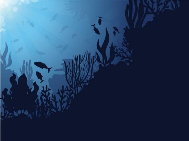 stockillustraties, clipart, cartoons en iconen met coral reef achtergrond - depth vector