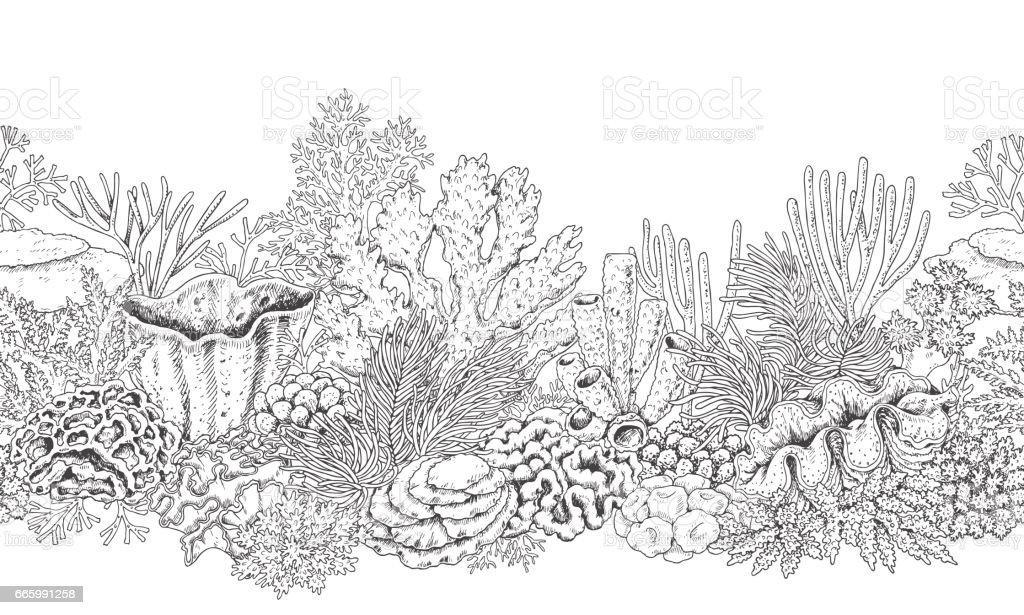 Line Art Underwater : Coral reef line horizontal pattern stock vector art more
