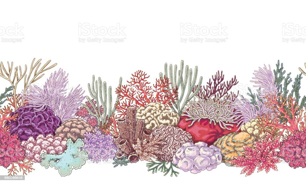 royalty free great barrier reef clip art vector images rh istockphoto com coral reef clipart png coral reef clipart free