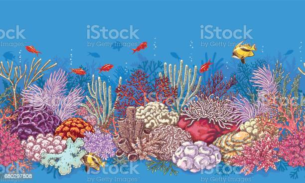 Coral Reef Line Pattern Stock Illustration - Download Image Now