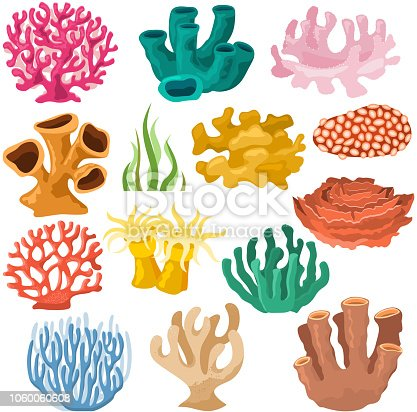 Coral vector sea coralline or exotic cooralreef undersea illustration coralloidal set of natural marine fauna in ocean reef and aquatic plant for aquarium isolated on white background.
