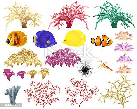 Corals and underwater fauna - various tropical fish, sponges, shrimp and urchin. Set of realistic vector illustrations.