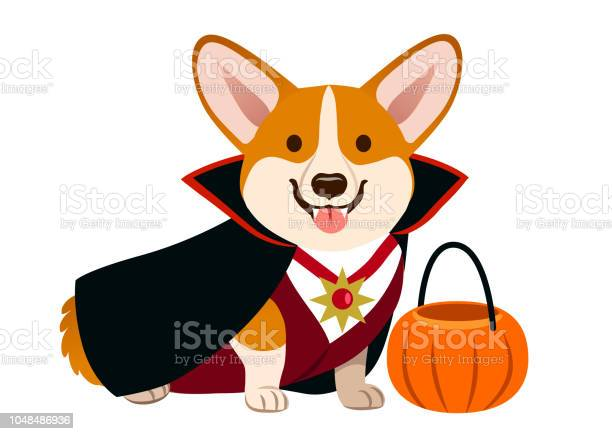 Corgi dog wearing vampire halloween costume with black cape fangs vector id1048486936?b=1&k=6&m=1048486936&s=612x612&h=ddmu3xbcigqqdh47ultt5dmkqp2wxjeqq5cn7pgpdc8=