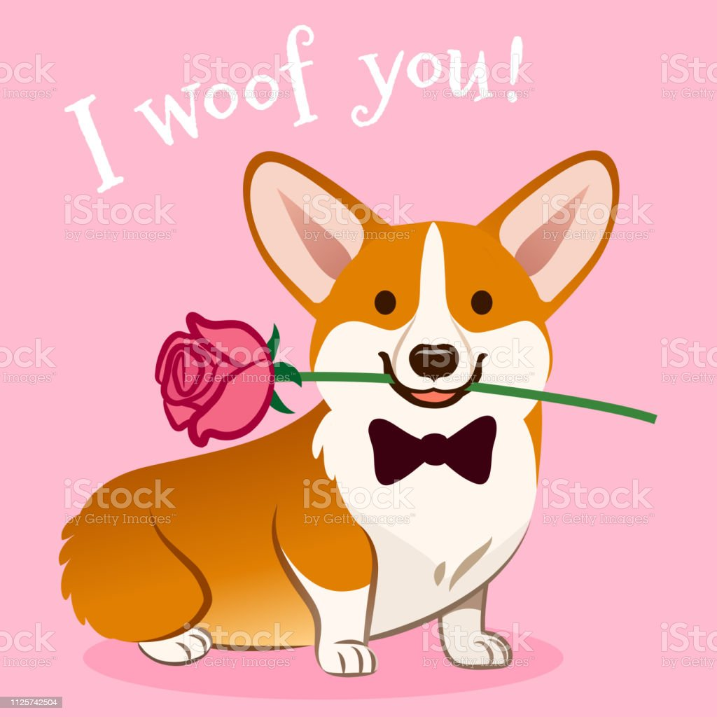 Download Corgi Dog With Rose Flower In Mouth Valentines Day Card ...