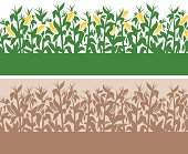 Detailed corn-themed field border with copy space.