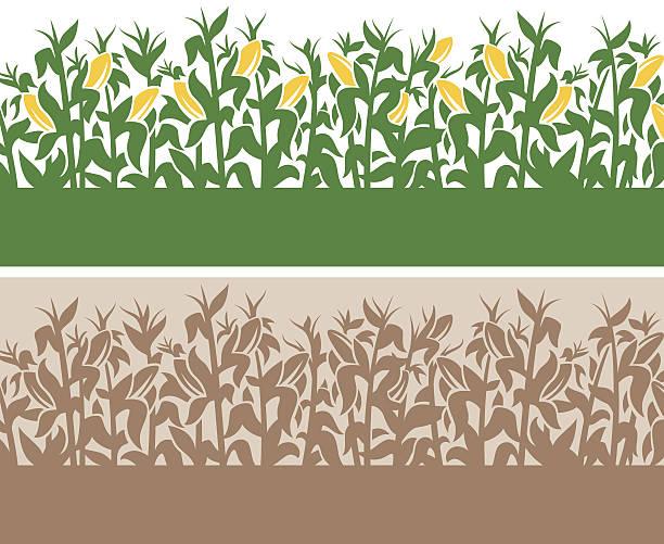 ilustrações de stock, clip art, desenhos animados e ícones de fundo de milho - milho