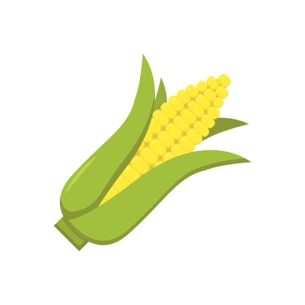 maiskolben auf weißem hintergrund in wohnung - mais stock-grafiken, -clipart, -cartoons und -symbole