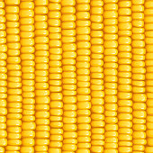 Corn cob. Organic food seamless pattern. Corncob natural meal. Ripe Maize. Product for cooking popcorn. Healthy eating. Vegetable. Realistic foodstuff. EPS10 vector illustration.