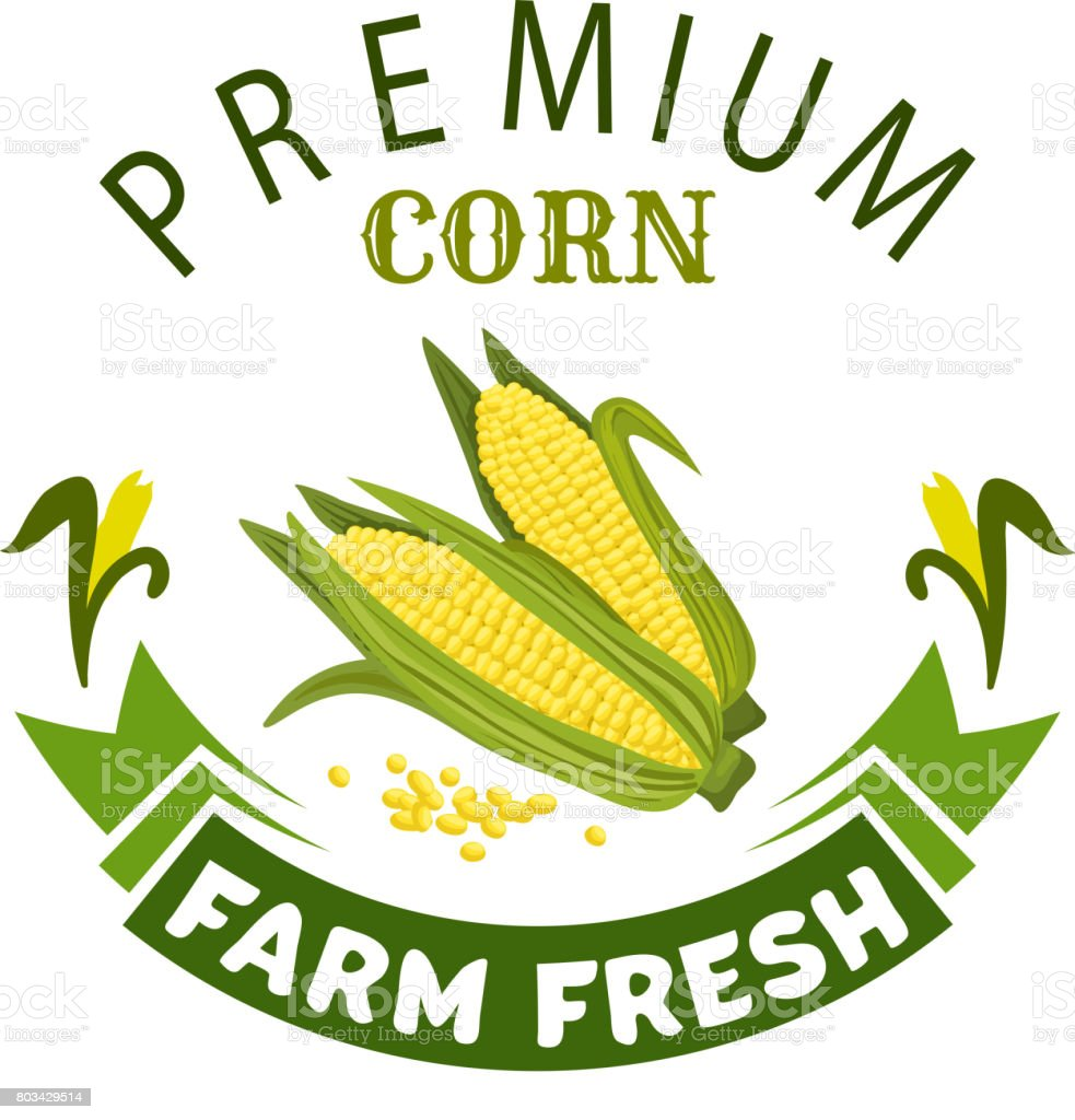 Corn cob vegetable vector icon or emblem vector art illustration