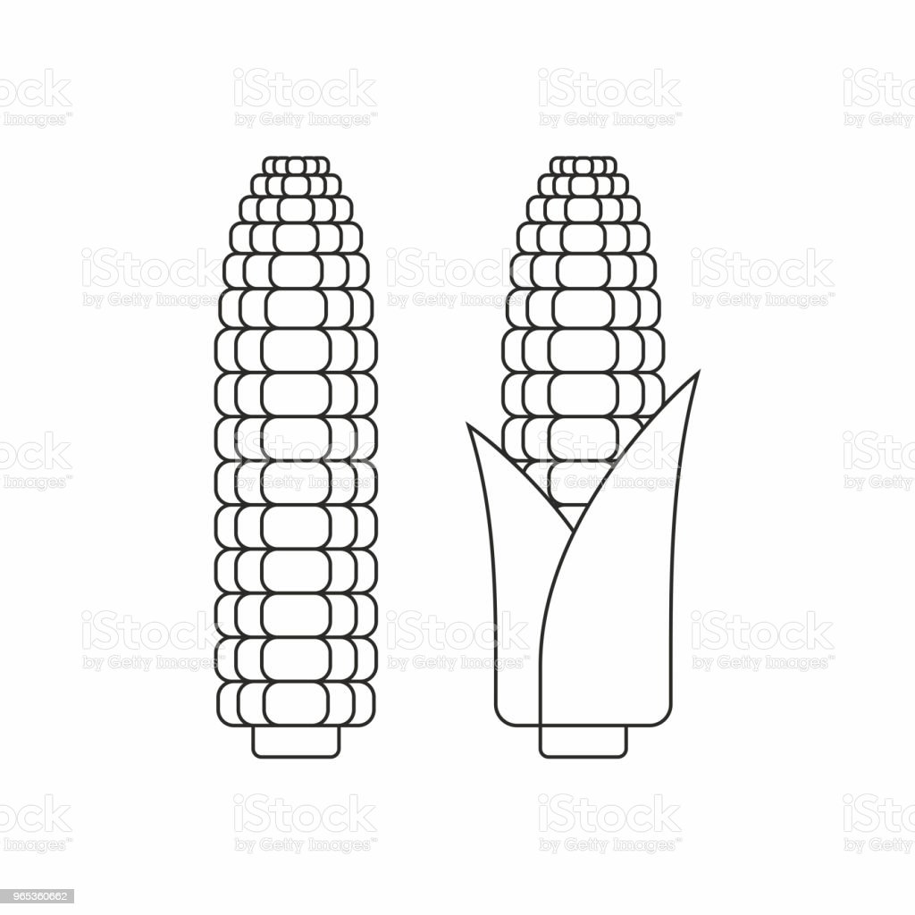 Corn cobs royalty-free corn cobs stock vector art & more images of agriculture