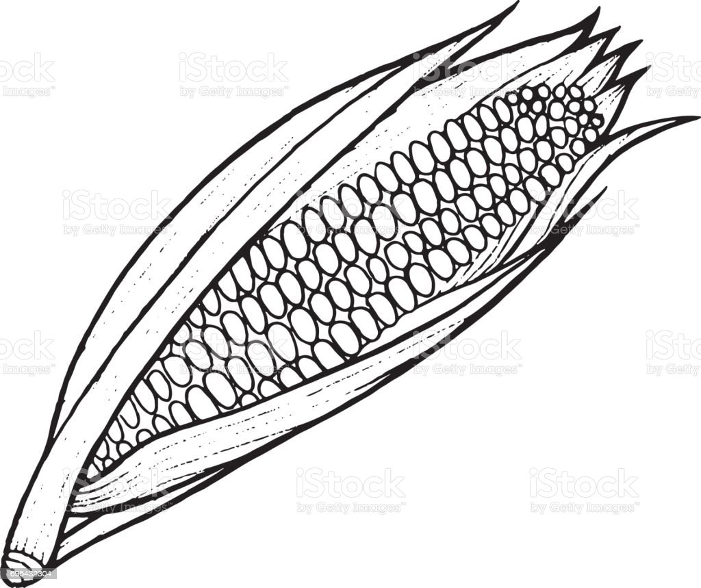 Corn Coloring Page Hand Drawn Illustration For Adult And