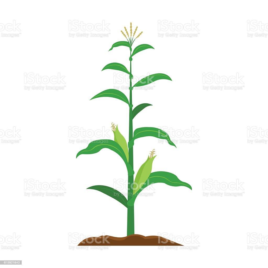 Corn Icon Cartoon Single Plant Icon From The Big Farm