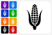 Corn Icon Square Button Set. The icon is in black on a white square with rounded corners. The are eight alternative button options on the left in purple, blue, navy, green, orange, yellow, black and red colors. The icon is in white against these vibrant backgrounds. The illustration is flat and will work well both online and in print.