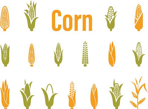 Corn icons. Vector illustration isolated on white background. Concept for organic products label, harvest and farming, grain, bakery, healthy food.