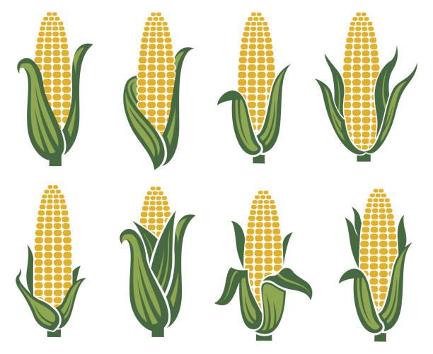 corn images set - corn field stock illustrations, clip art, cartoons, & icons