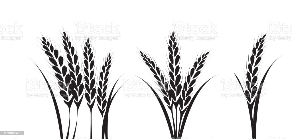 royalty free sheaf of wheat clip art vector images illustrations rh istockphoto com wheat clip art black and white what clip art do screen printers use