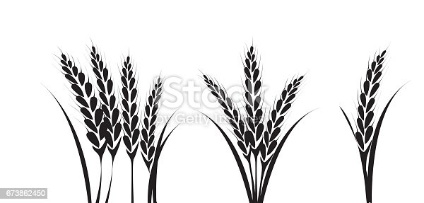 Corn Or Wheat Silhouette Drawings Stock Vector Art & More ...