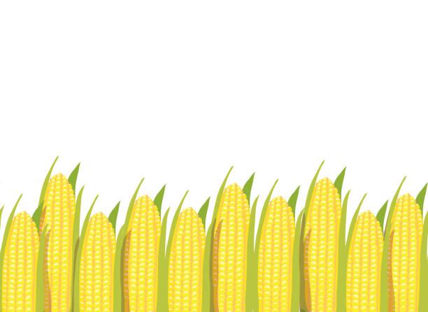 corn plants horizontal seamless pattern background border - corn field stock illustrations, clip art, cartoons, & icons