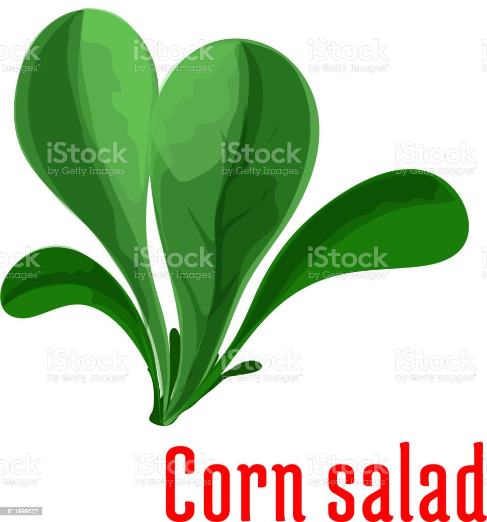 corn salad dark green leaves icon cartoon style stock vector art
