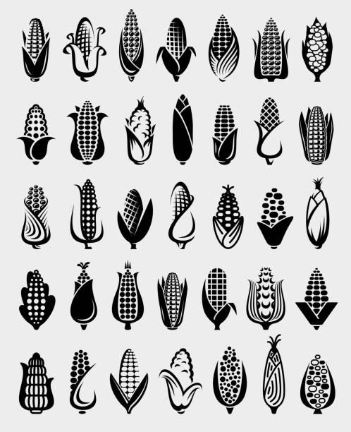 ilustrações, clipart, desenhos animados e ícones de conjunto de milho. milho do ícone da coleção. vetor - corn farm
