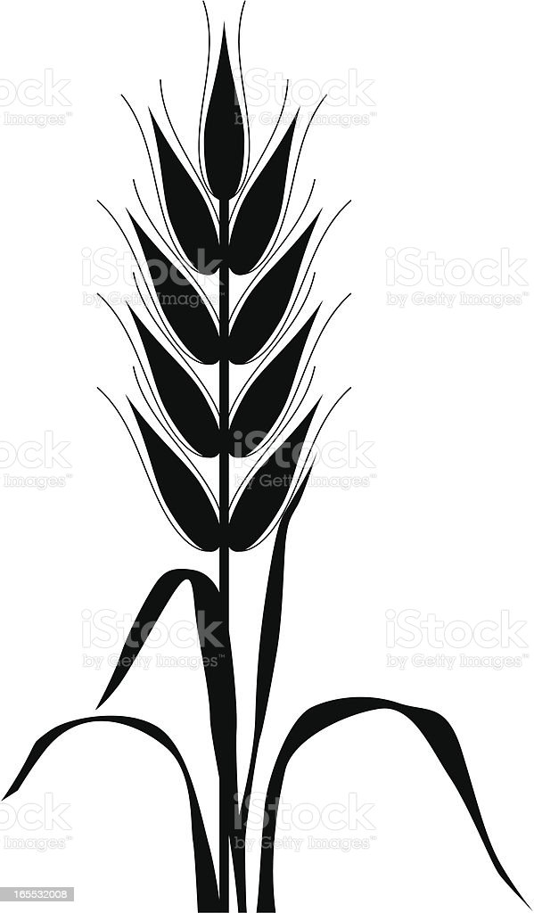 Corn silhouette royalty-free stock vector art