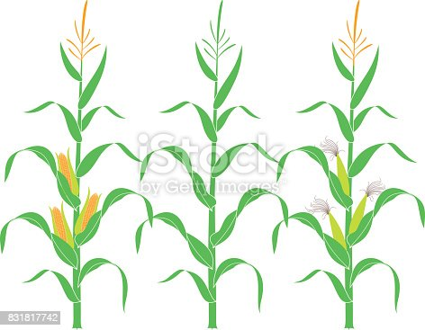 Corn free logo designs to download for Corn stalk template