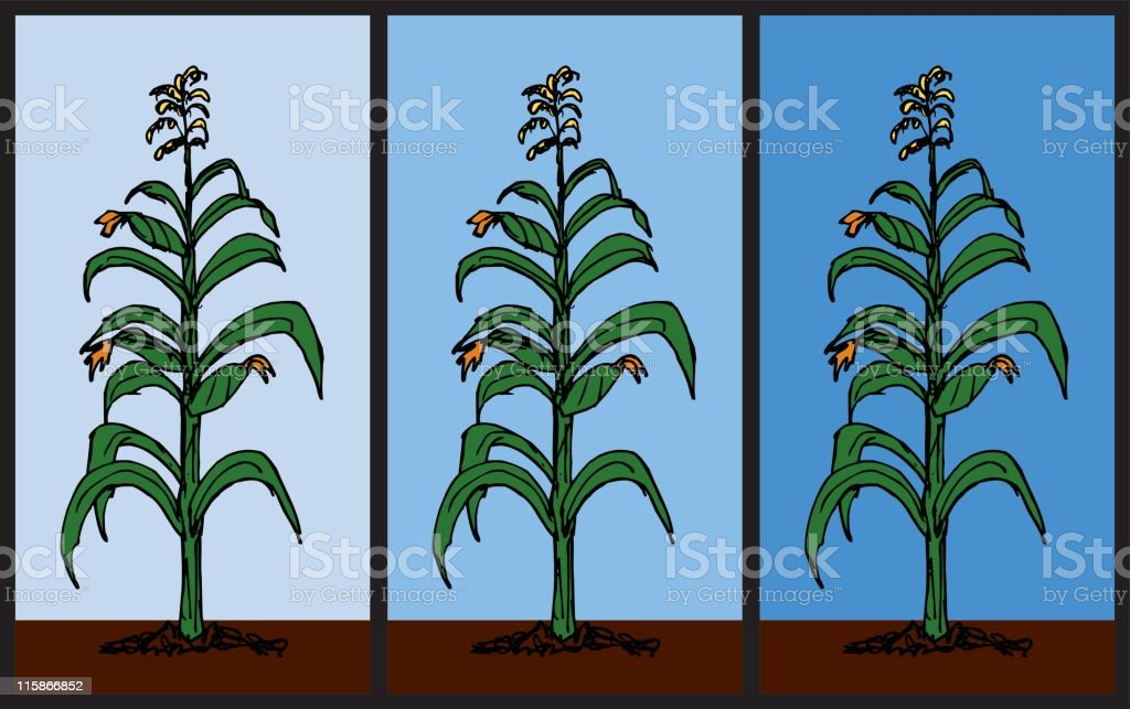 Corn stalk pattern stock vector art more images of for Corn stalk template