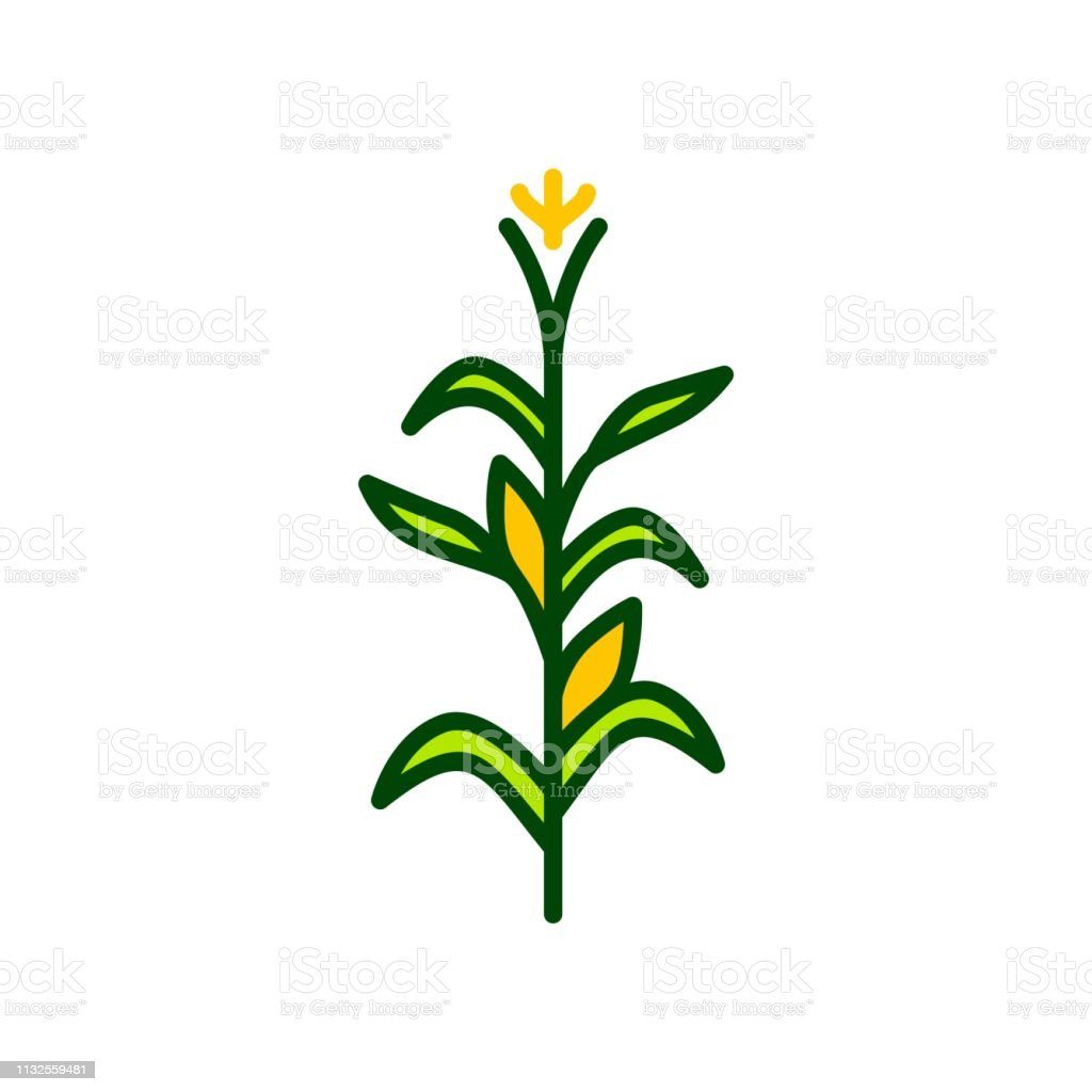 corn tree vector icon illustration color - Royalty-free Agricultura arte vetorial