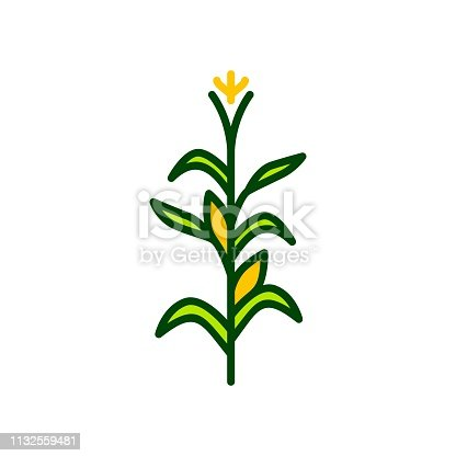 corn tree vector icon illustration color