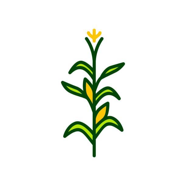 ilustrações de stock, clip art, desenhos animados e ícones de corn tree vector icon illustration color - milho